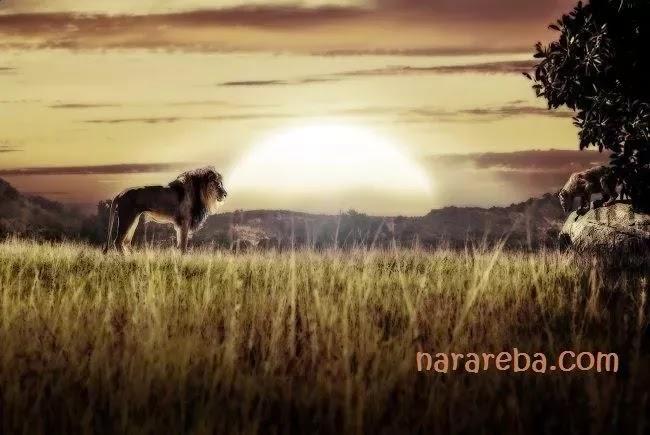 Dua Thundang, Perjalanan Nara Reba